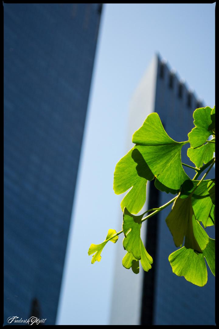 Ein wenig grün im Großstadtdschungel