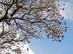 Ein Winterbeerenbaumtraum