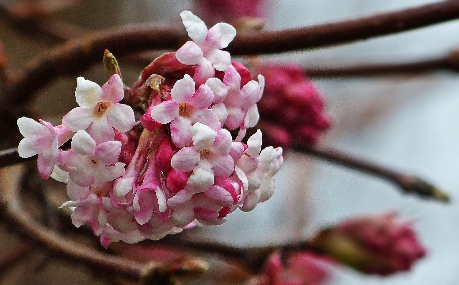 Ein Winterblüher