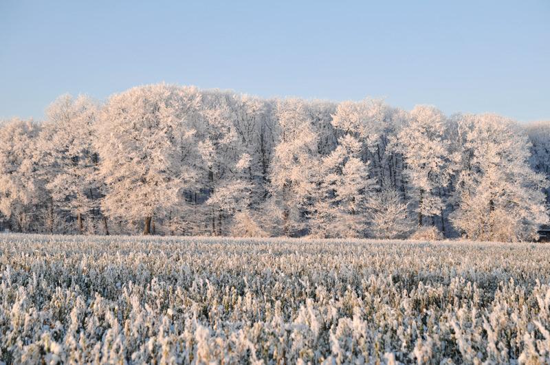 Ein Wintermärchen 02