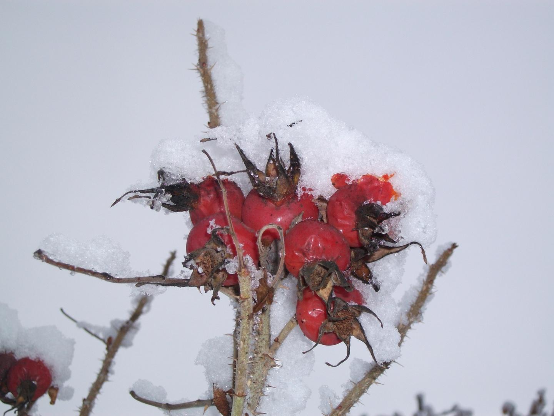 Ein Winterspatziergang
