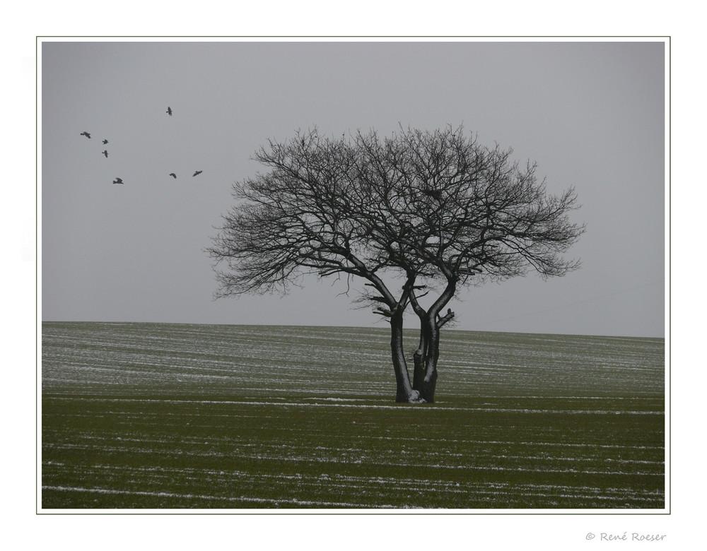 Ein Wintertag auf dem Feld