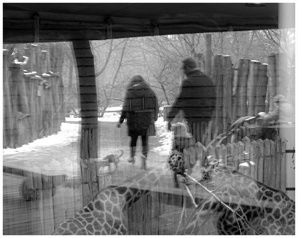 Ein Wintertag im Zoo