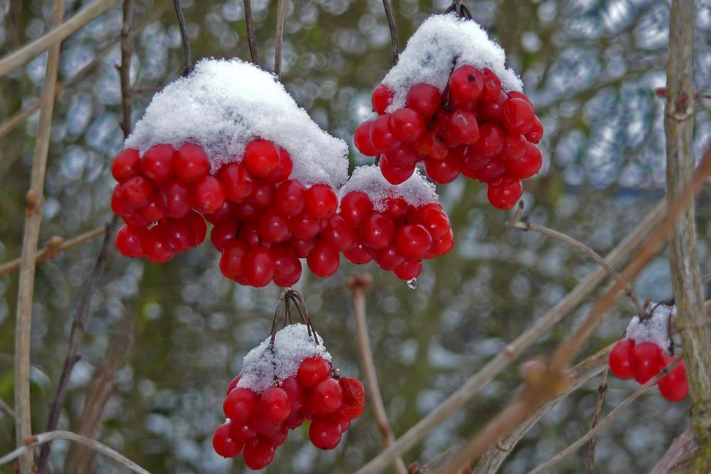 Ein Wintertag (Rot / weiß)