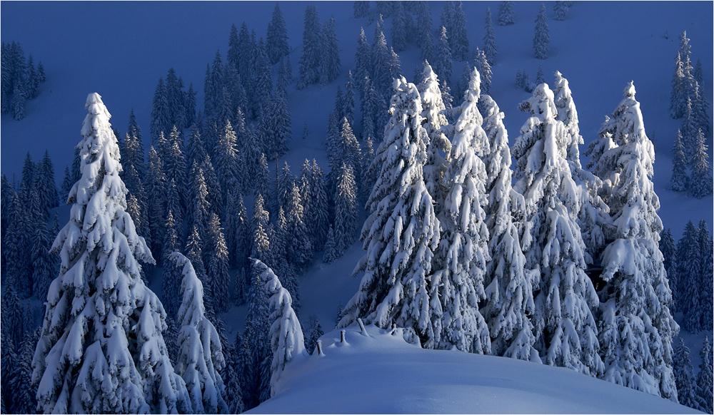 Ein Wintertraum im November