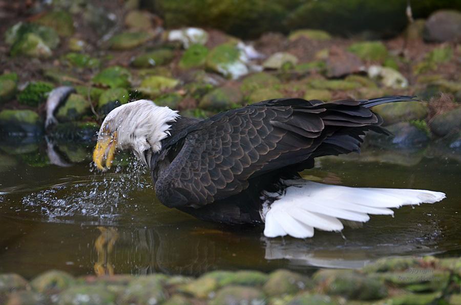 Ein WKSA geht baden :-)