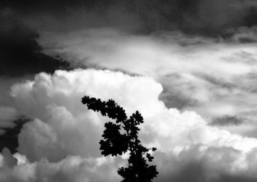 """Ein """"Wolkenstrauch"""" im Wind... ;-)"""