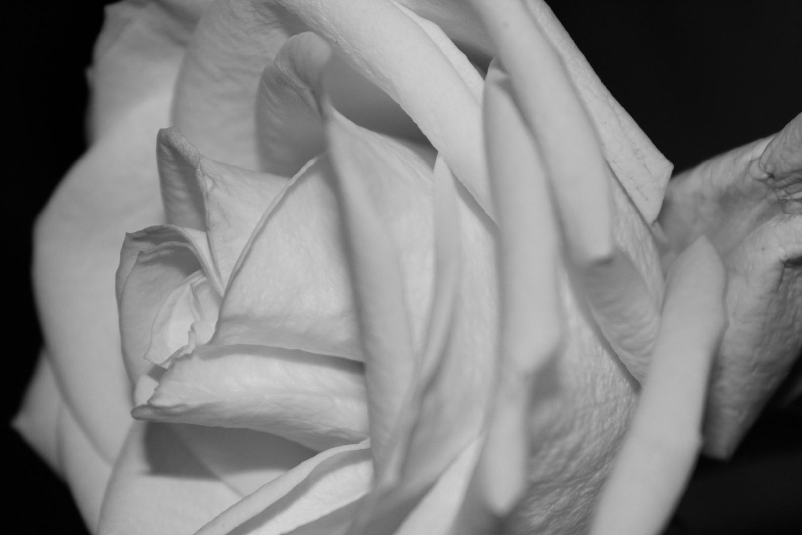 Ein Wunder in Schwarz/Weiß