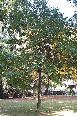 Ein wunderschöner Baum