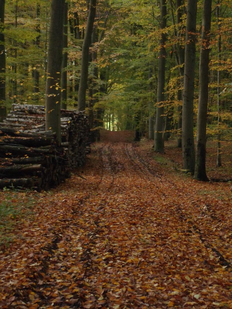 Ein wunderschöner Herbst.