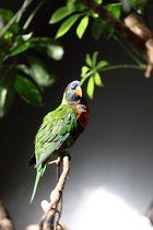 Ein wunderschöner Papagei