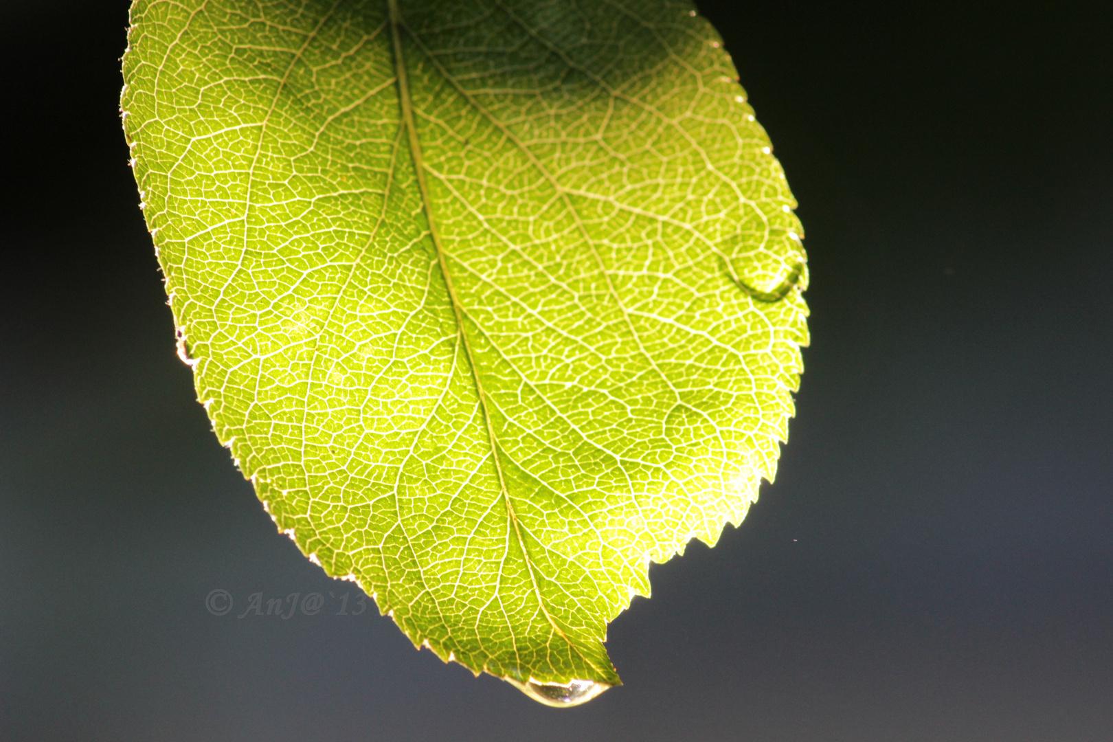 Ein wunderschönes grün