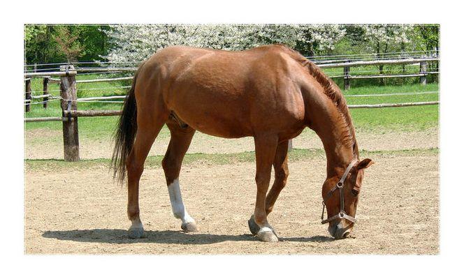 Ein wunderschönes Pferd