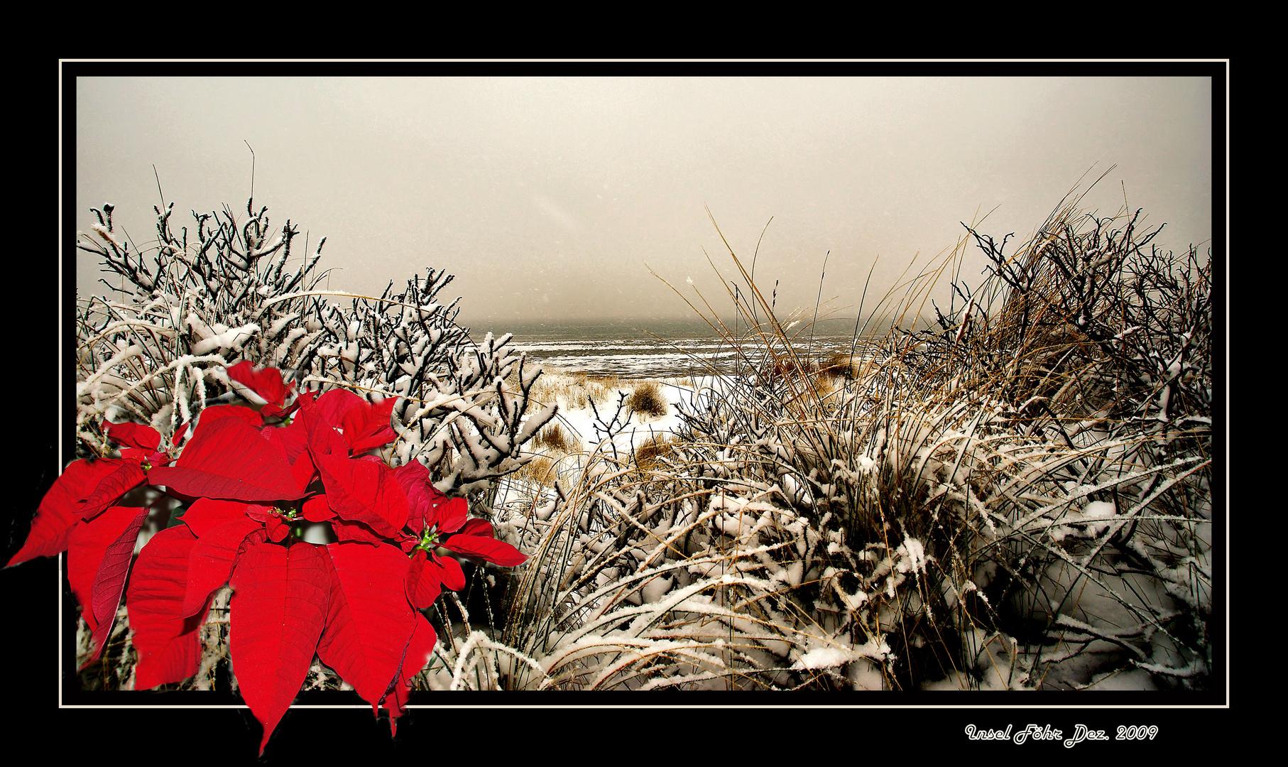 Ein wunderschönes Weihnachtsfest und einen guten Rutsch ins Jahr 2010