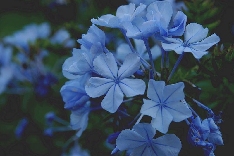 Ein zartes Blau
