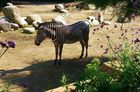 Ein Zebra ;-)