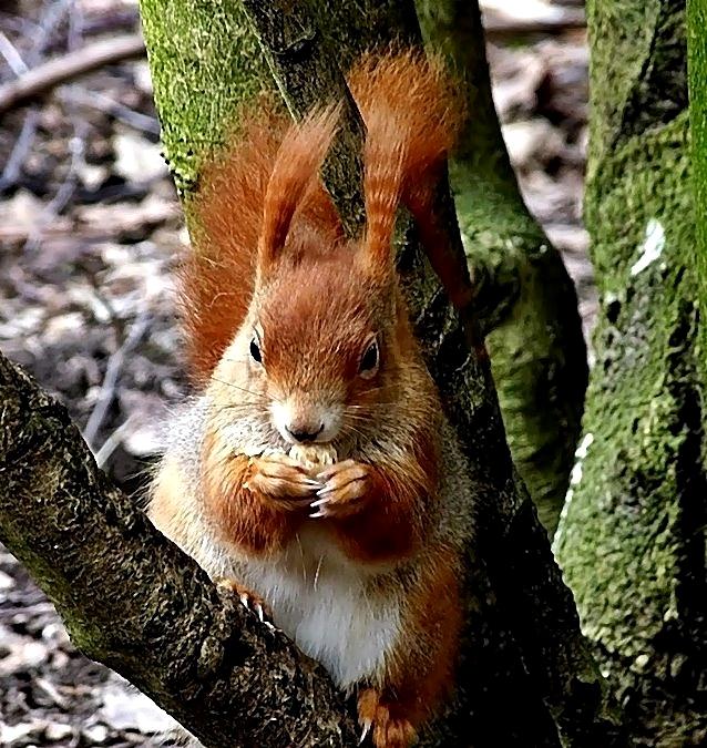 Ein zutrauliches Hörnchen . . .
