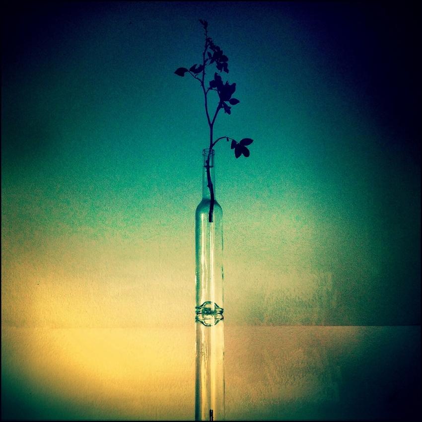 ein Zweig