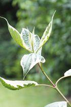 Ein Zweig im Winde