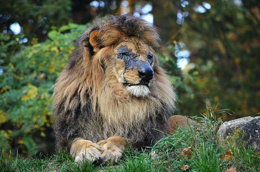 Ein Zwinkern vom König !!!