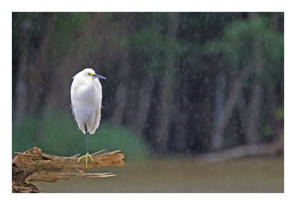 Einbein Vogel