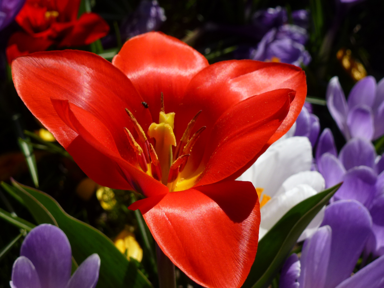 Einblick in den Frühling...................