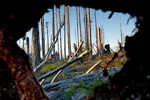 Einblick ins Waldsterben