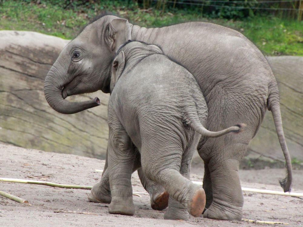 Einblicke in Hagenbeck's Tierpark