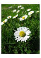 Eindeutig Frühling II