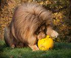 Eindeutig sein Ball;-)