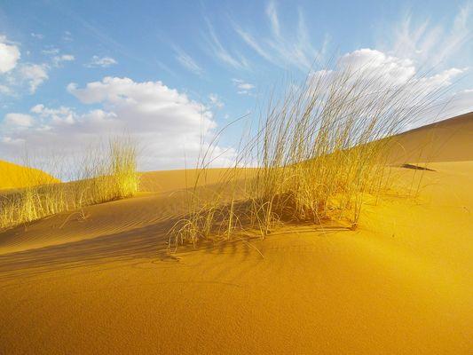Eindrücke der Wüstenreise Frühling 2012