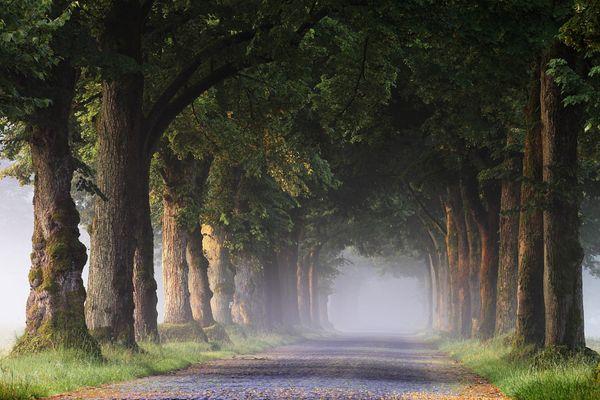 Eine Allee zum Träumen ... - Une avenue à rêver ...