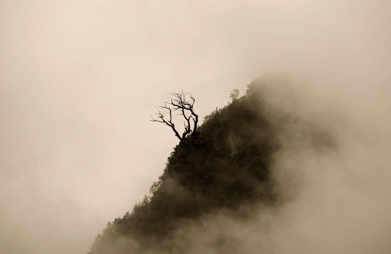 Eine alter Baum geht auf die letzte Reise, Bild 2 von 5