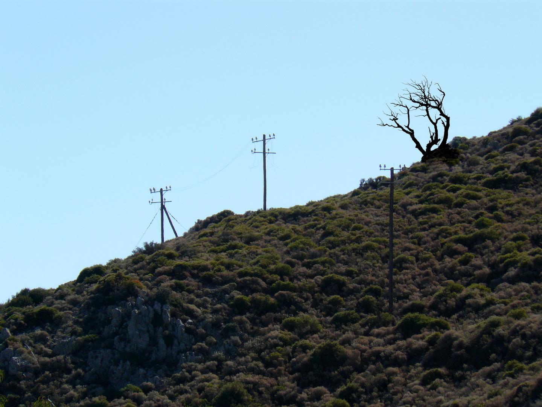 Eine alter Baum geht auf die letzte Reise, Bild 4 von 5