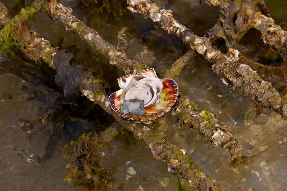 eine andere Impression einer Muschelbank auf der Halbinsel Quiberon