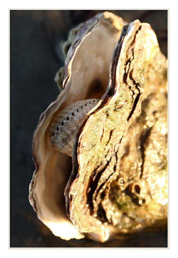 Eine Auster mit Herz