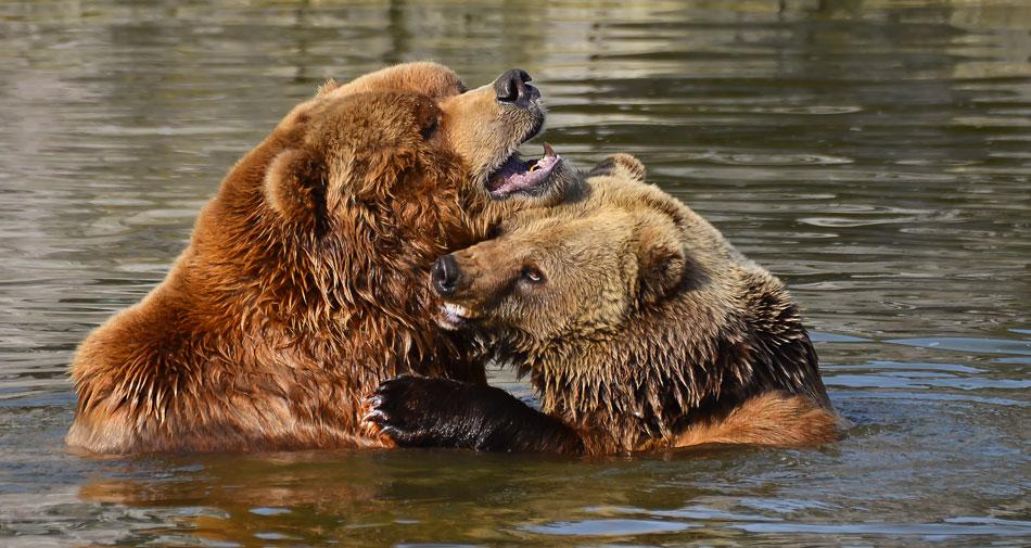 Eine Bärenliebe