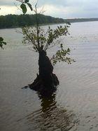 Eine Baum im See