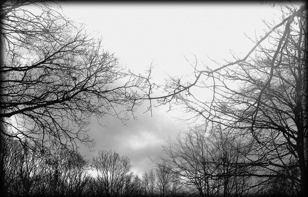 Eine Baumfreundschaft...