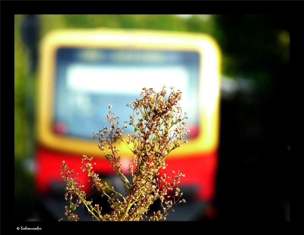 eine Baureihe 481 im Norden Berlins...