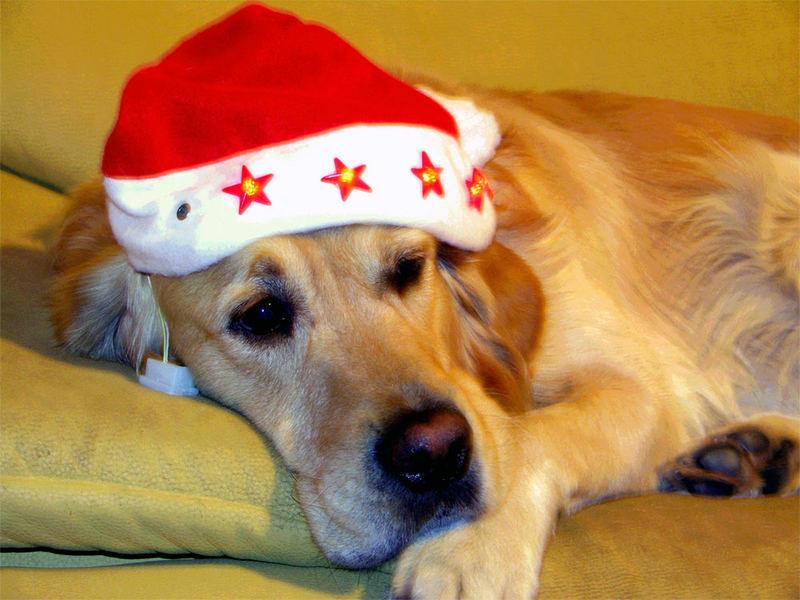 Eine besinnliche Weihnacht...