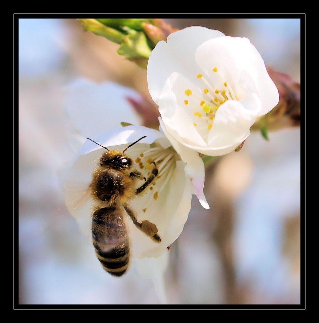 Eine Biene Maya....