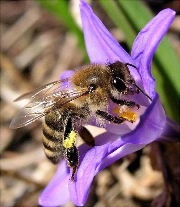 eine Biene - weil wir so lange keine mehr gesehen haben :-)