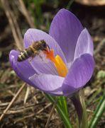eine Bienengeschichte in vier Bildern (Bild 3 - Ziel erreicht)