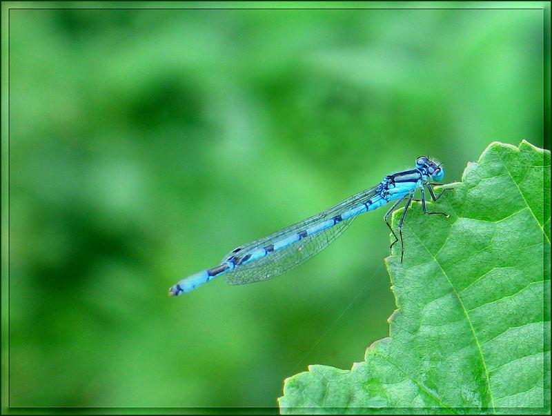 Eine blaue Schönheit...