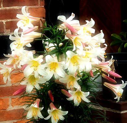 eine blühten pracht