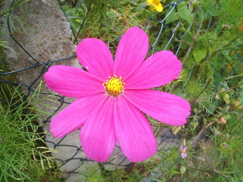 Eine Blüte