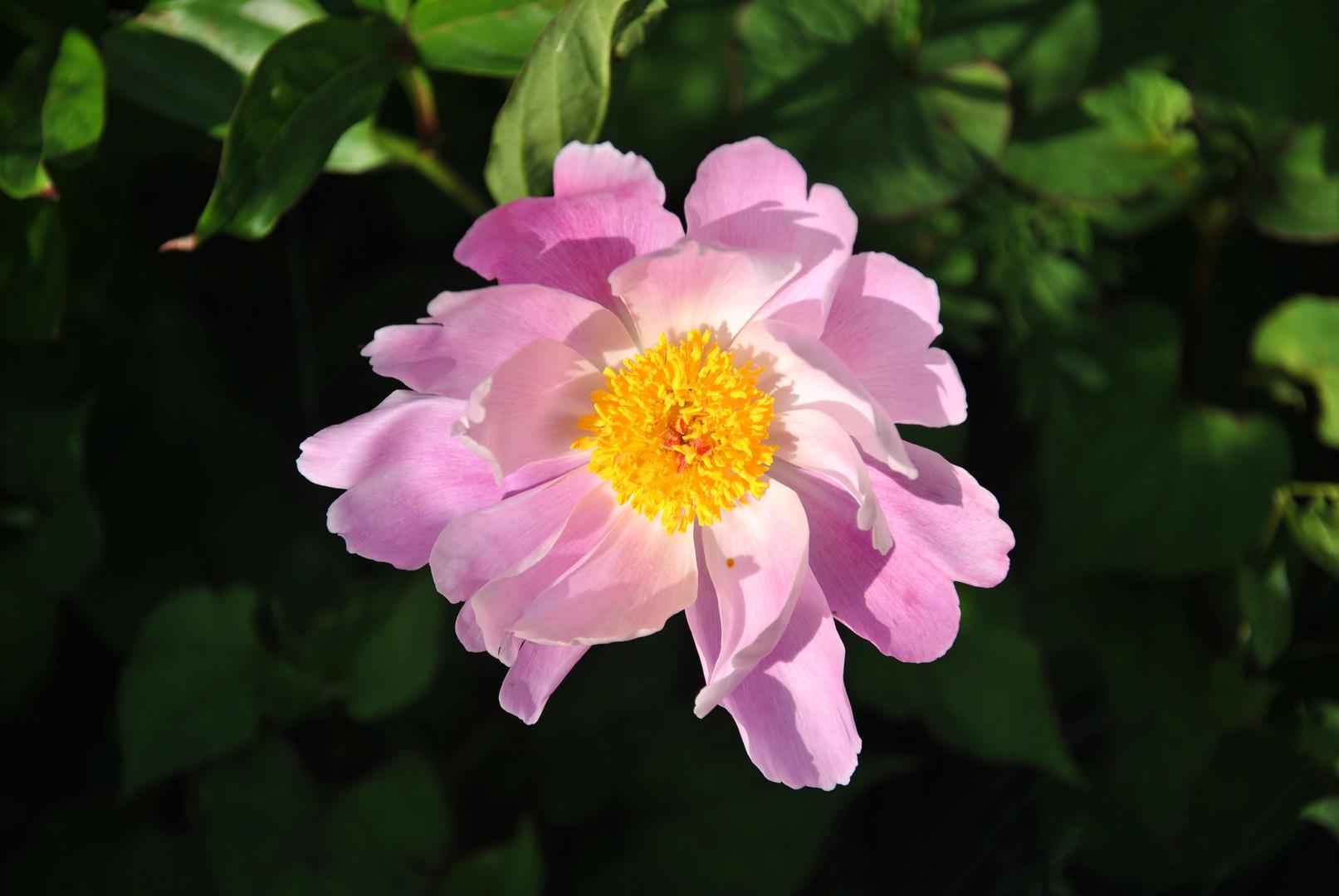 Eine Blüte.