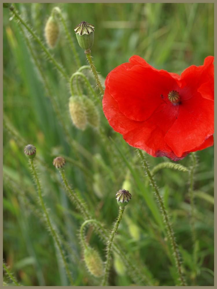 Eine Blüte im Feld