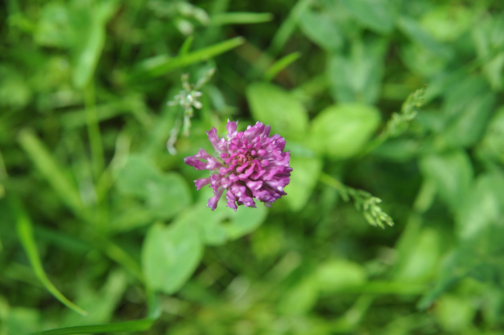 Eine Blüte im Grünen